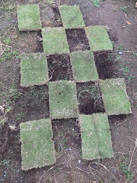 芝生張り方 市松張り