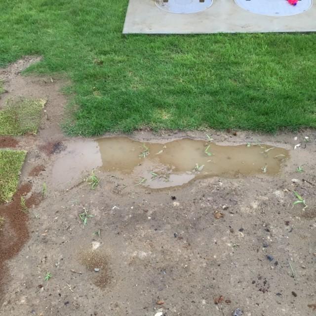 芝生 水たまり