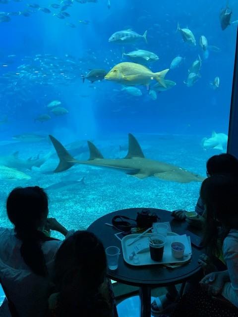 美ら海水族館 カフェ レストラン