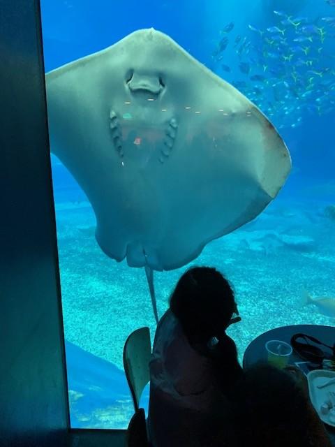 美ら海水族館 カフェ・レストラン
