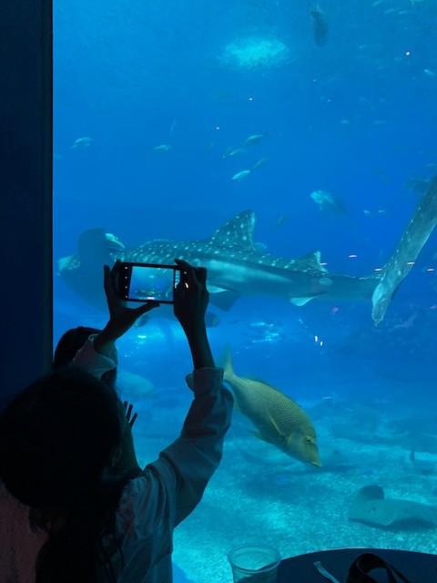 美ら海水族館 レストラン カフェ