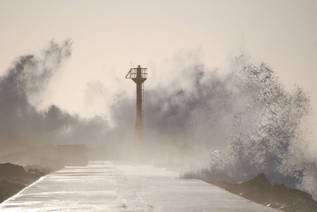 台風 植木 枯れ 塩害