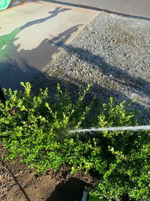 台風 塩害 植木